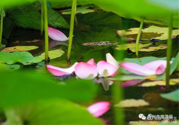 在青州山水间旅游,过一个惬意的夏天!