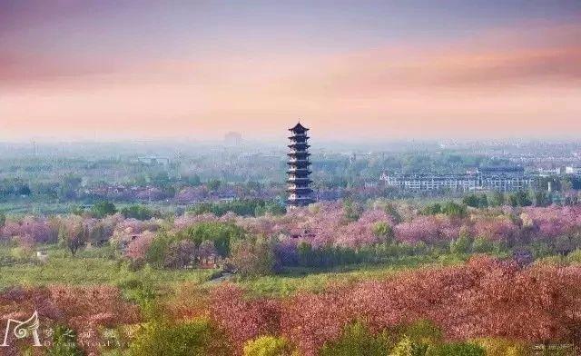 """""""东风洒雨露,繁花漫古城""""究竟是怎样的一种美?青州就是答案!"""