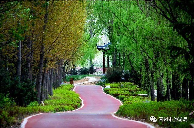 青州弥河湿地公园